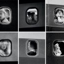 Portraits from the window seat: the pensive expressions of John Schabel's Passengers